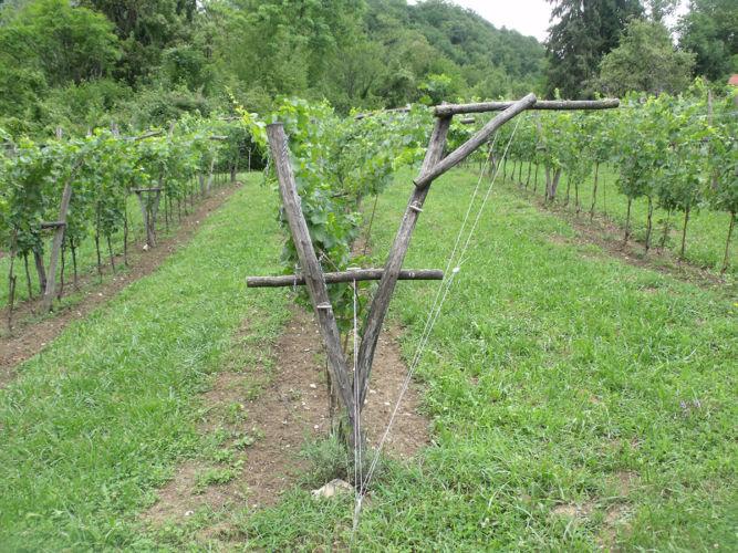 Impalcatura allevamento della vite inventata da Lorenzo Zanon