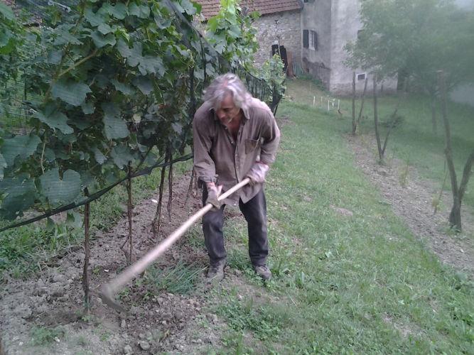 Lorenzo Zanon Che Zappa in Vigna Monte Santo